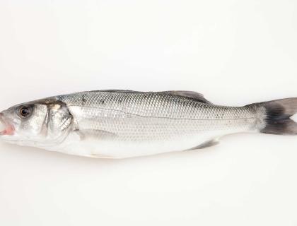 Labraks (okoń morski, seabass)