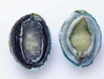 Abalone (słuchotki)